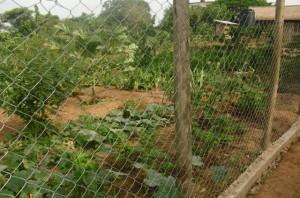 Garden at Msalato